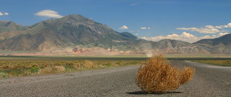 Blog featured image tumbleweed